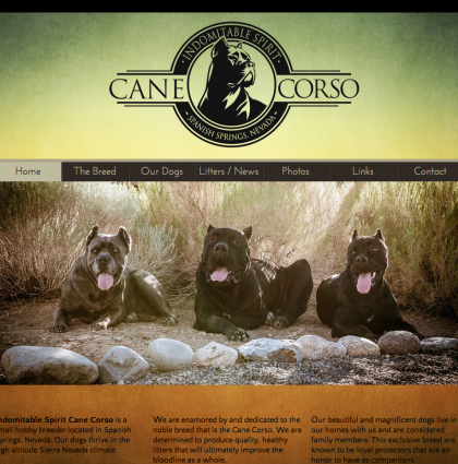 Indomitable Spirit Cane Corso